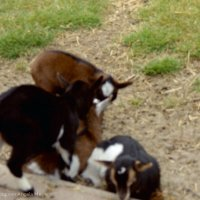 Schiermonnikoog 2004_37